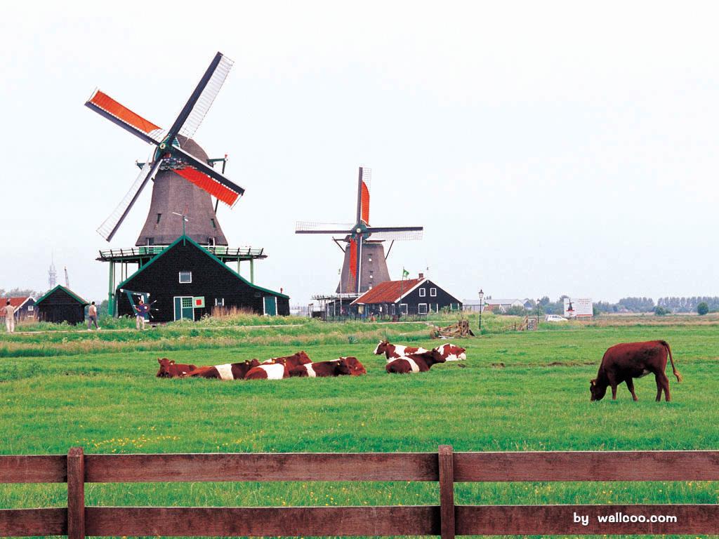 荷兰自然风光