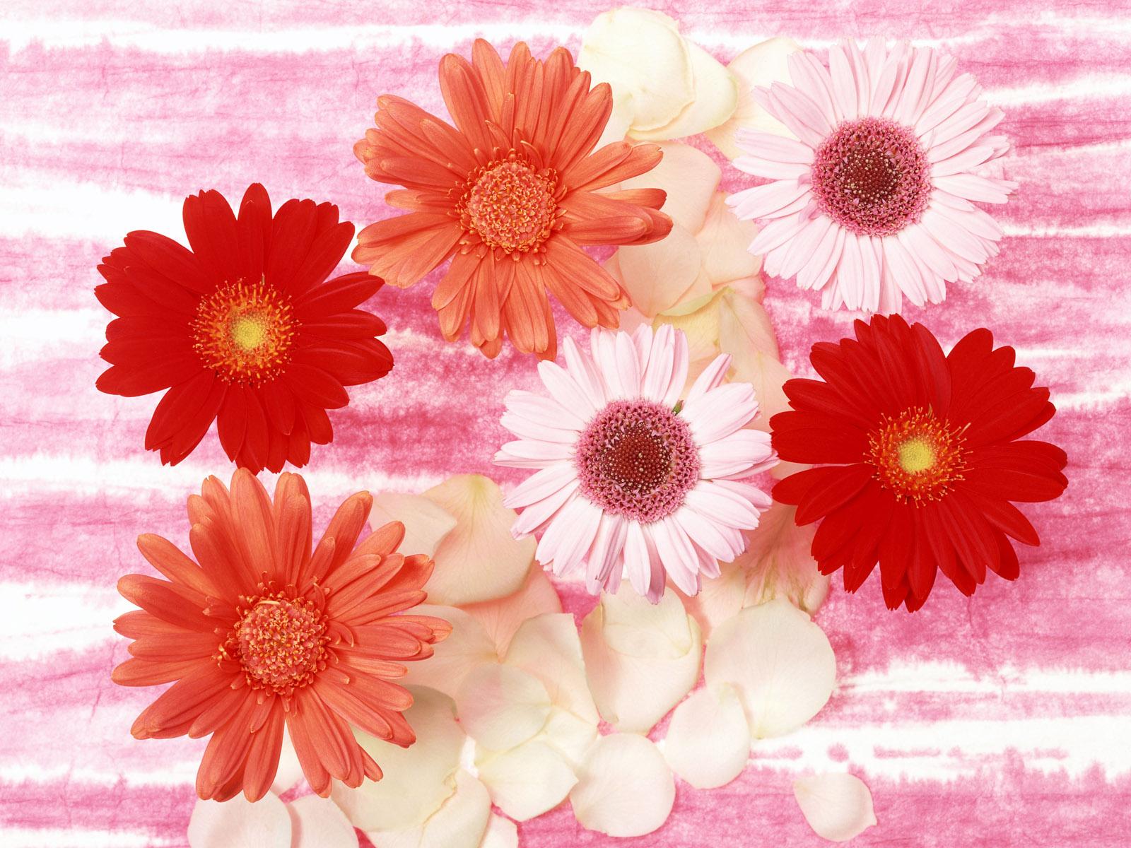 高精美鲜花壁纸
