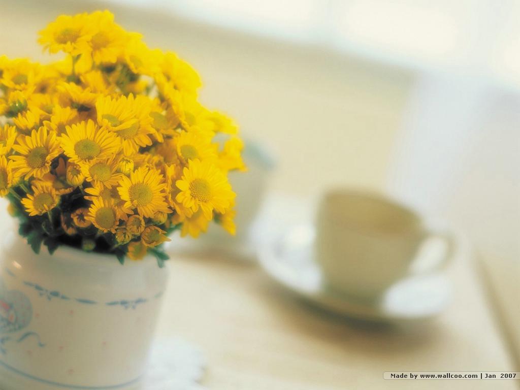 高贵典雅鲜花桌面