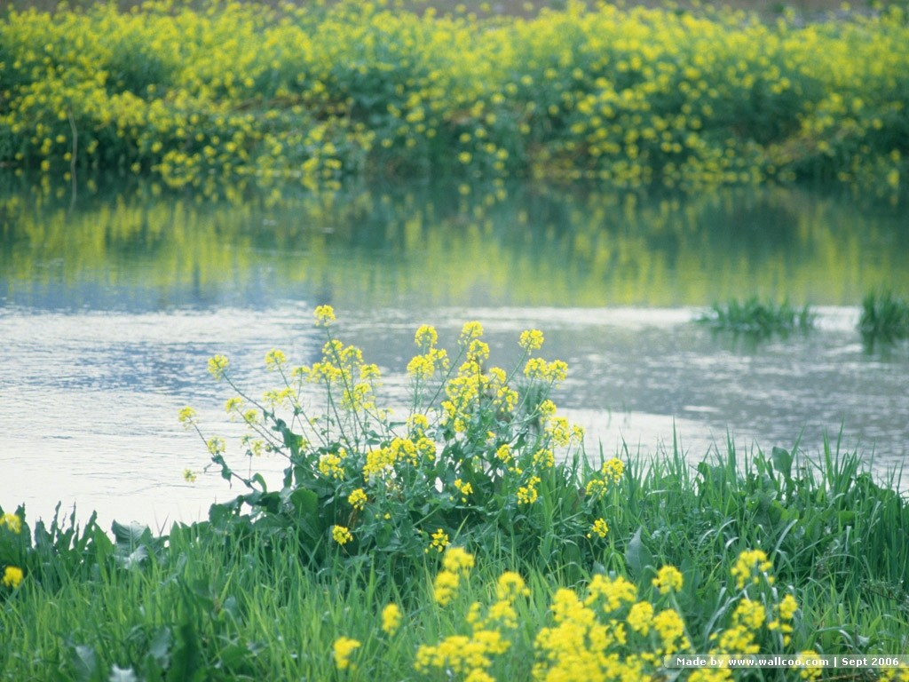 春天景色图片